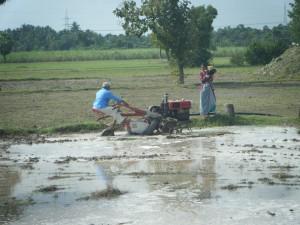 Rice- India-Francis