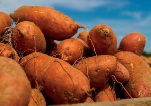 sweet potatoes for blog